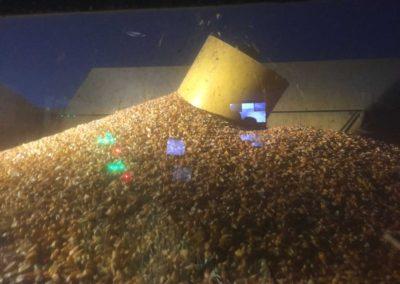 Bass Corn Yields